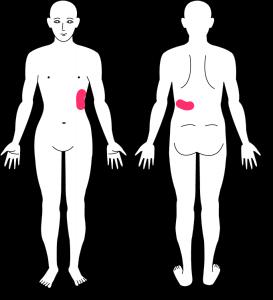 が ズキン 脇の下 左 痛い 脇の下が痛いズキズキの時とは?
