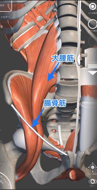 大腰筋と腸骨筋